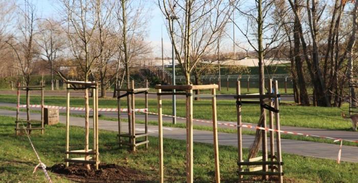 Prawie 500 nowych drzew i ponad 30 tysięcy  krzewów